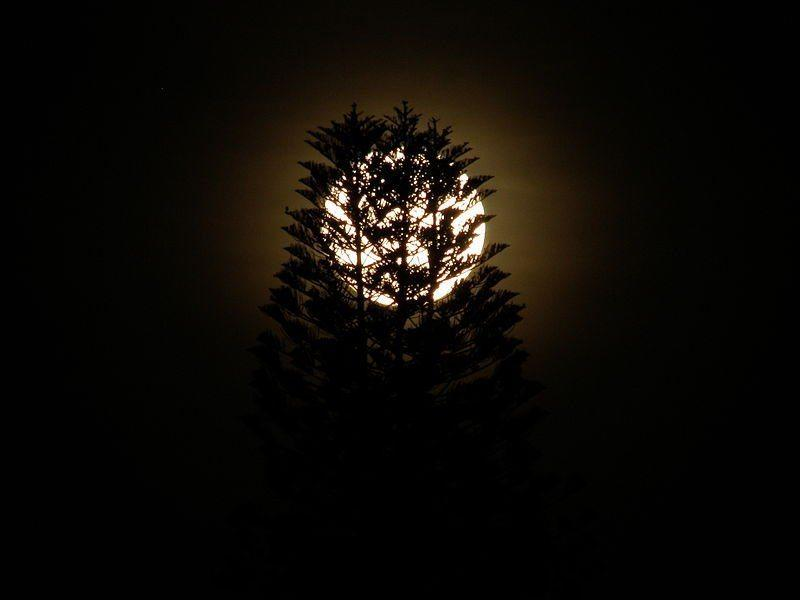 800px Moon behind tree