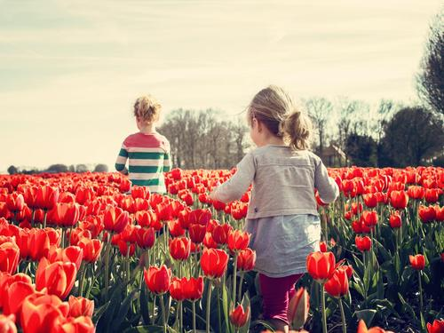 2 kids walking on red tulip garden under blu sky 36745
